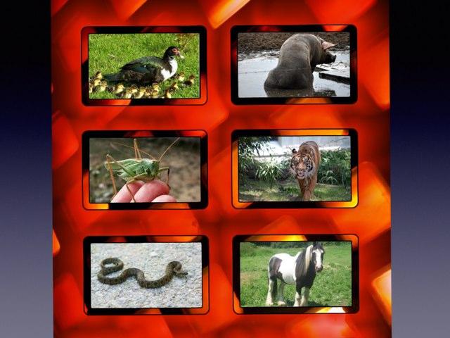 Animales: propiedades y grafía by Ignacio Martín