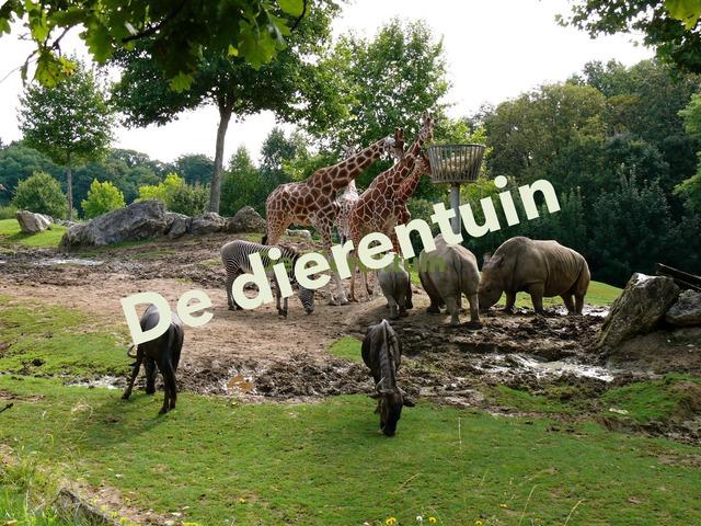 De dierentuin by Stefanie