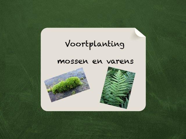 Voortplanting mossen en varens by Kirby Janseghers