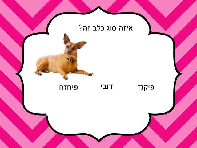 כלבים אוריה ומוריה by בית ספר קישון