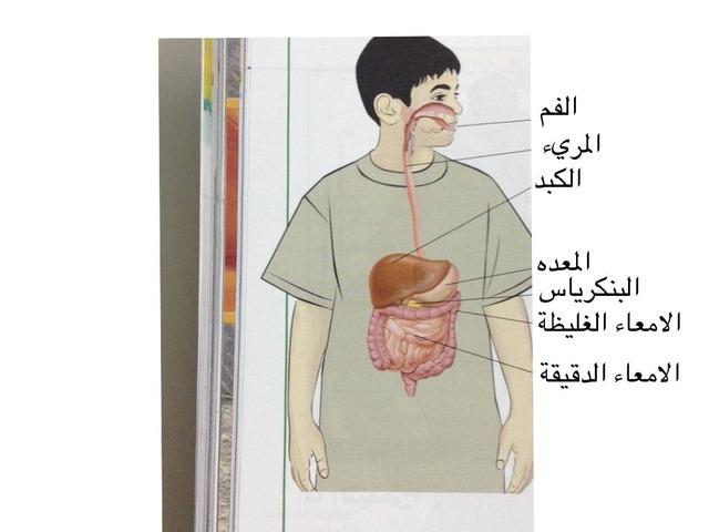الجهاز الهضمي by mmm gh