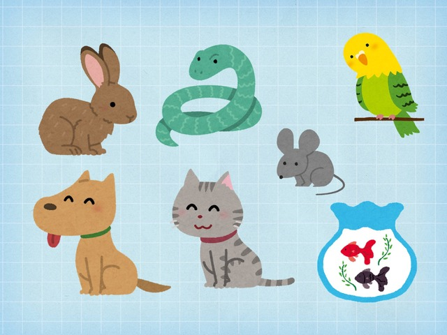 Year 1 Pets Quiz by Katie English