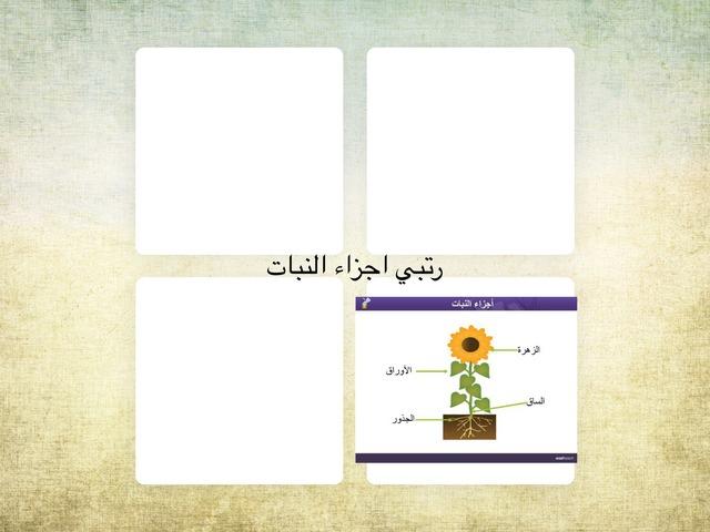 اجزاء النبات by Remo OT
