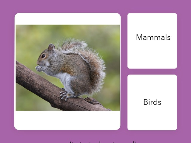 Ba 201 Squirrel Quiz Nanda And Julia by Bilingual Adventure