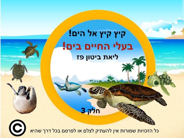 בעלי החיים בים קיץ אל הים חלק שלישי by Liat Bitton-paz