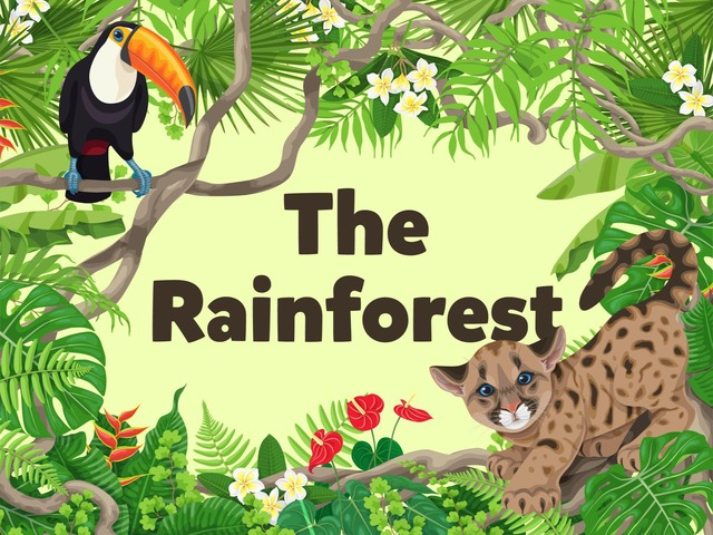 The Rainforest by Kids Dailies