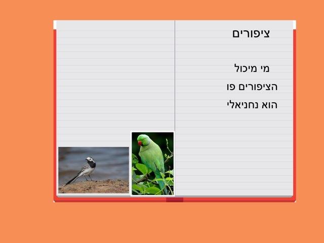 ציפורים איילת by בית ספר קישון