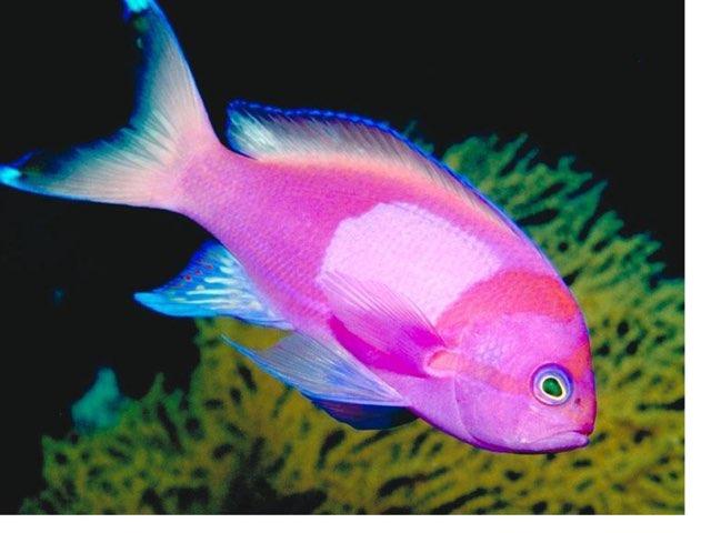 פאזל דג by רינת ידגר