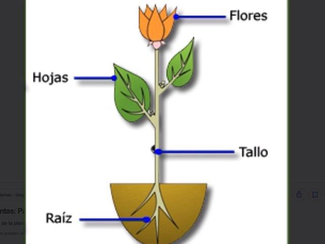 Partes De Una Planta by María Jose Vintimilla