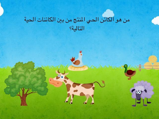 الكائنات المنتجة by Eman Alawadhi