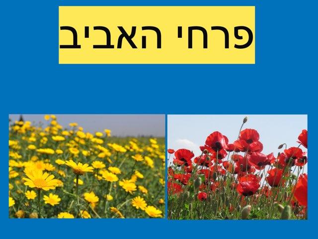 פרחי אביב by Gal Maor