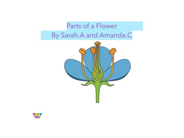 Sarah & Amanda's Flower by Ashley Shaw