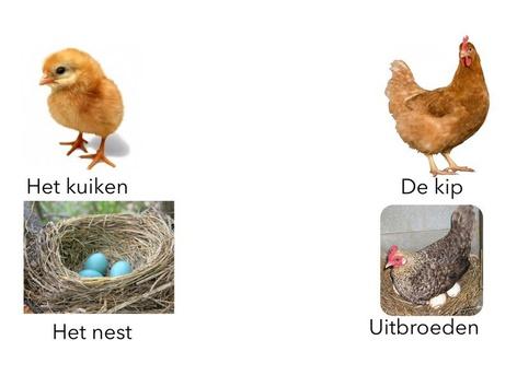 Taalkring peuters week 4 by Lisa Boekel