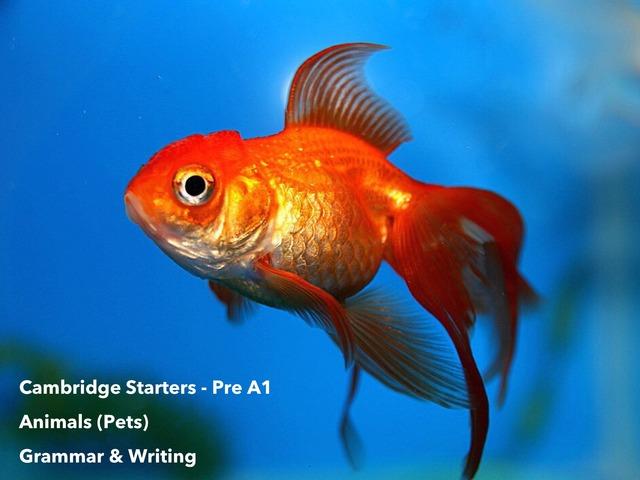 "Animals Pets - ""This is a (noun)"" Grammar & Writing  - Cambridge Starters Pre A1 ESL EFL EAL by Teeny Tiny TEFL"