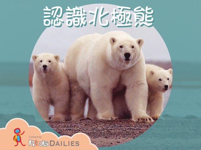 認識北極熊 by Kids Dailies