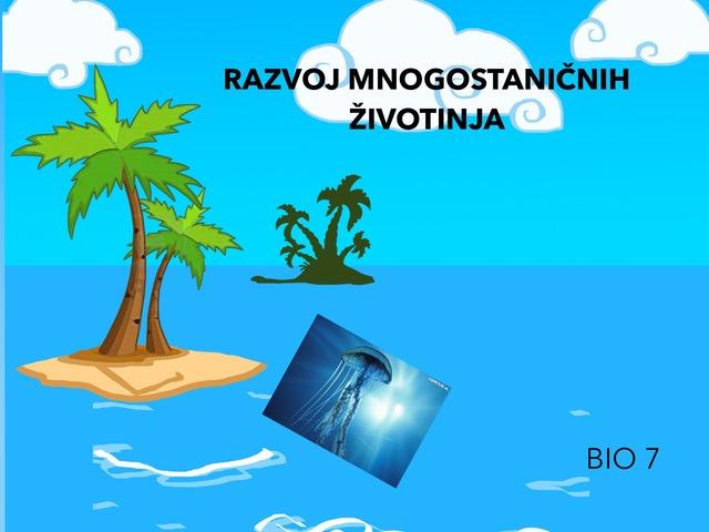 RAZVOJ MNOGOSTANIČNIH ŽIVOTINJA- Spužve,Žarnjaci, Plošnjaci by Sanja Koroman Lavižati
