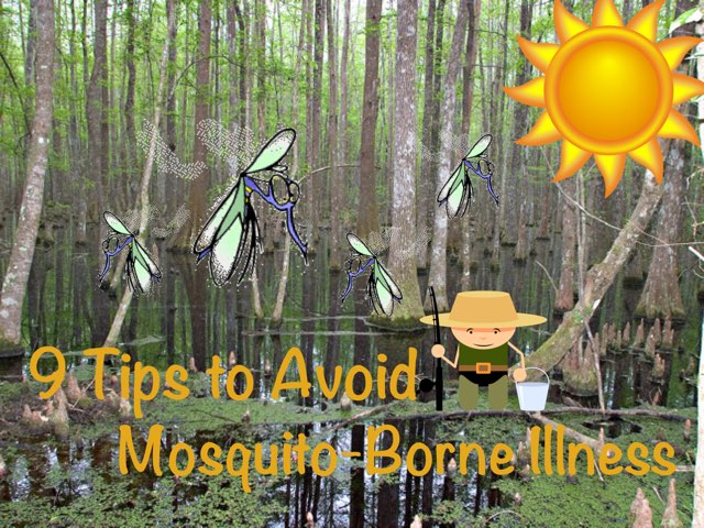 9 Tips to Avoid Mosquito-Borne Illness by Ely Eastman