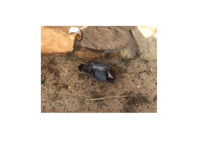 ציפור מתה בחצר by Varda Lavi
