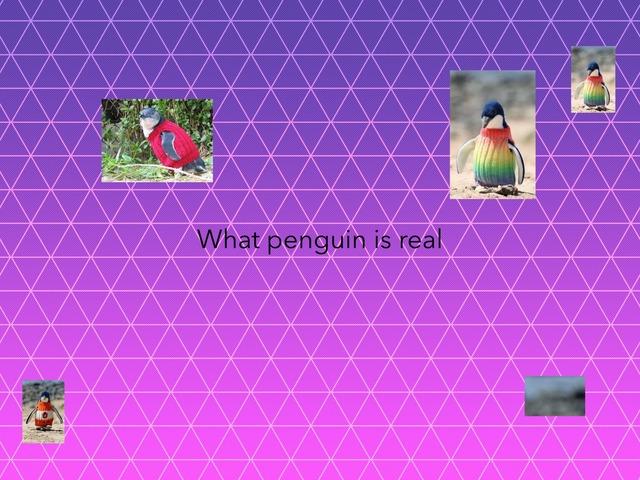 Penguin Quiz by Gemma Clarke