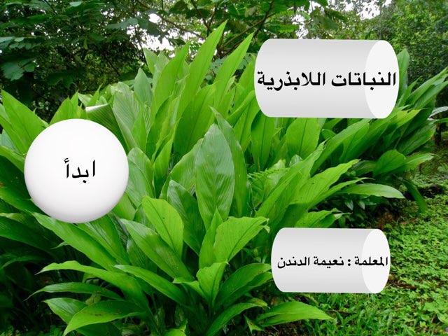 نبات لا بذري by نعيمه جواد