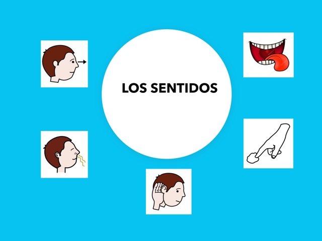 Hablamos De Los Sentidos by Francisca Sánchez Martínez