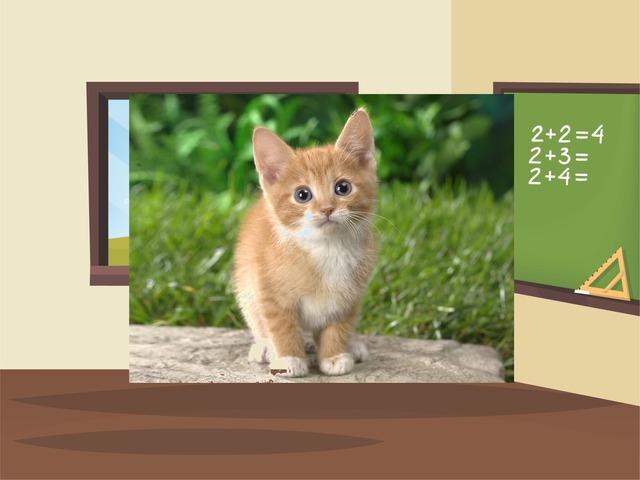 Kitten by Riham Hammad