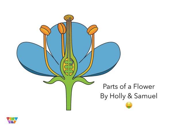 Holly & Samuel's Flower by Ashley Shaw