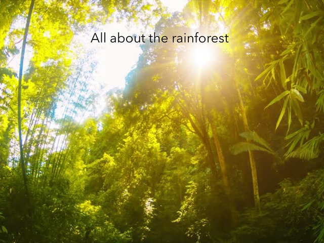 All About The Rainforest by RGS Springfield