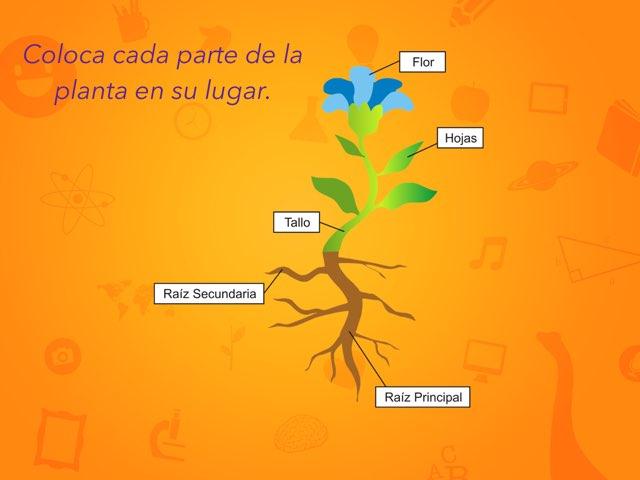 Coloca Las Partes De La Planta by Helios Rivero Ramos