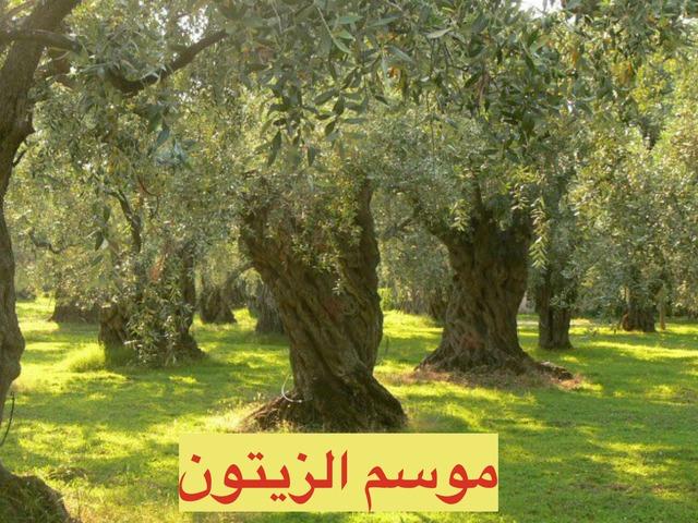 موسم الزيتون by Ibtisam Idkidek