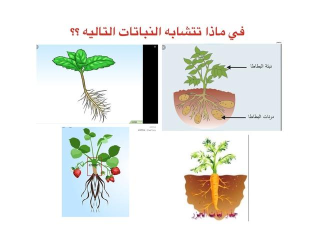 أجزاء النبات by تغريد الغامدي
