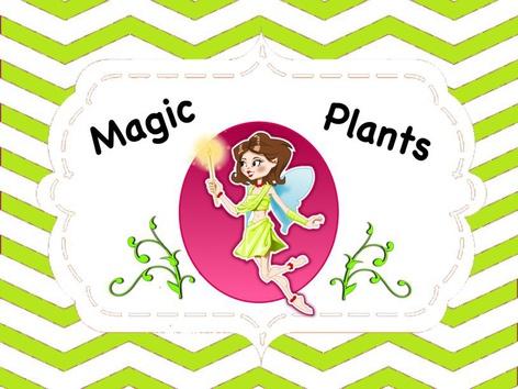 Magic Plants by Ellen Weber