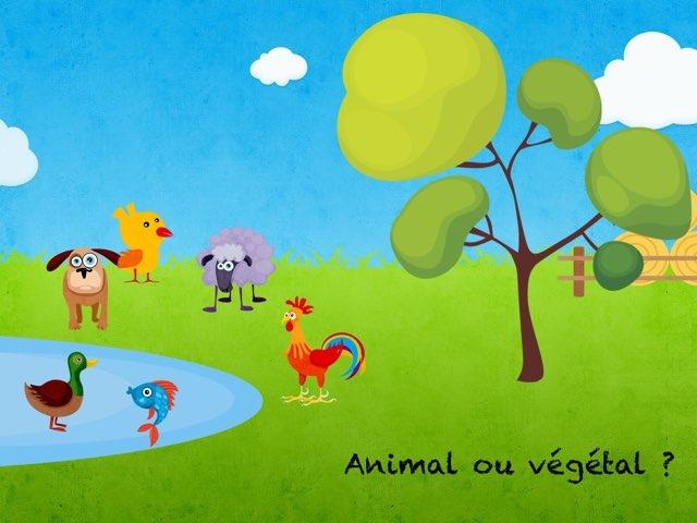 Végétal Animal  by Marie S