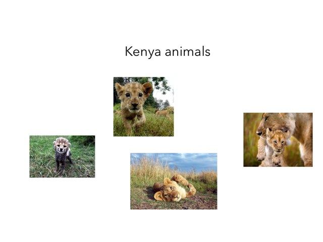 Kenya - Annaliese by FarBrook School