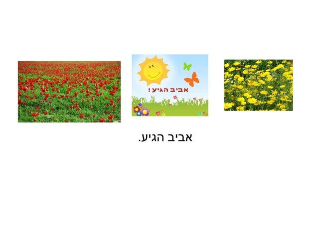 אביב היגע by Ronit Vaida Tubul
