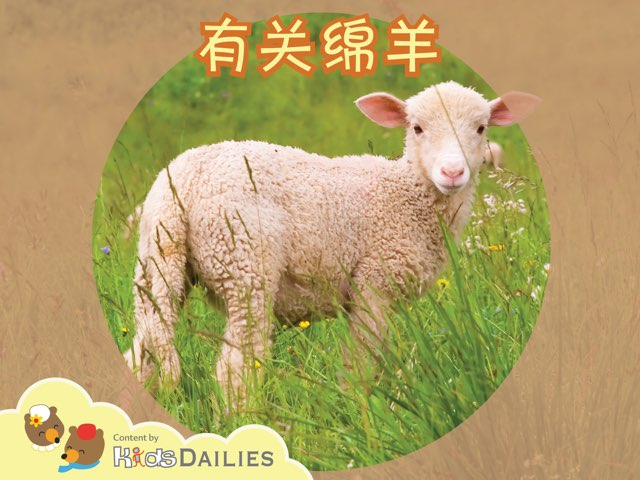 关于绵羊的小常识 by Kids Dailies