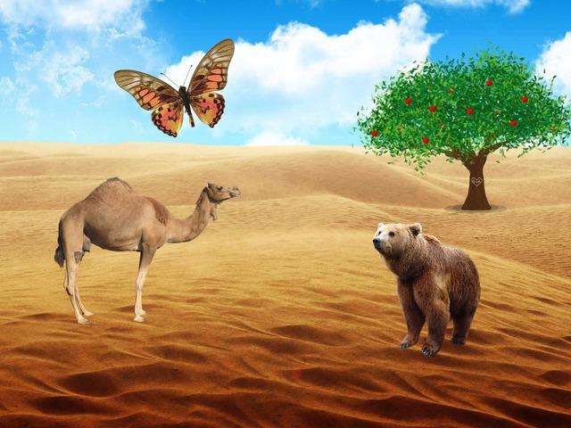 النظام البيئي على اليابسة  by hanan alhashemi