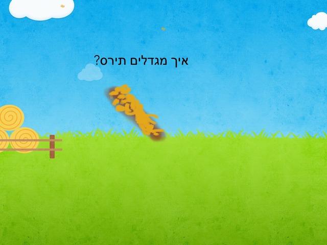 איך מגדלים תירס by Shimrit Gozlan