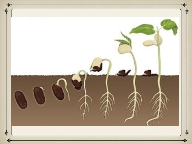 مراحل نمو النبات أولى وثالث ابتدائي by جنوبيه والفخر ليا