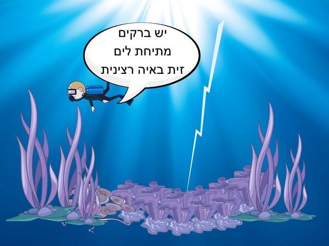 הברקת by Ricki Caduri