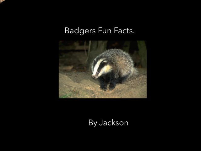 Badgers Fun Facts by Candice Valladao