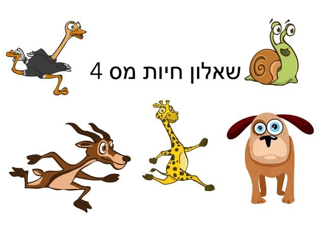 חיות מ׳ס 4 by Meital Avissar