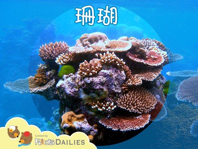一起來學習關於珊瑚的知識吧! by Kids Dailies