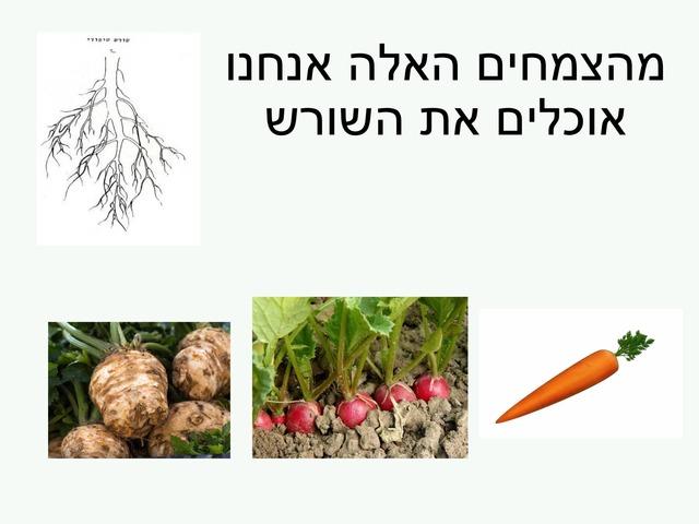 גינון 4 by Hadasim alut