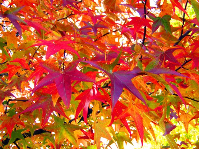 Autumn / Fall - Numbers, Colours (Colors), Animals by Teeny Tiny TEFL