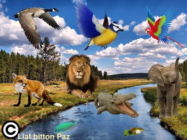 מיון והכללה: בעלי החיים בים ביבשה ובאוויר by Liat Bitton-paz