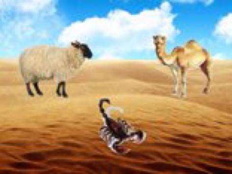 البيئة البرية by sara Al-salman