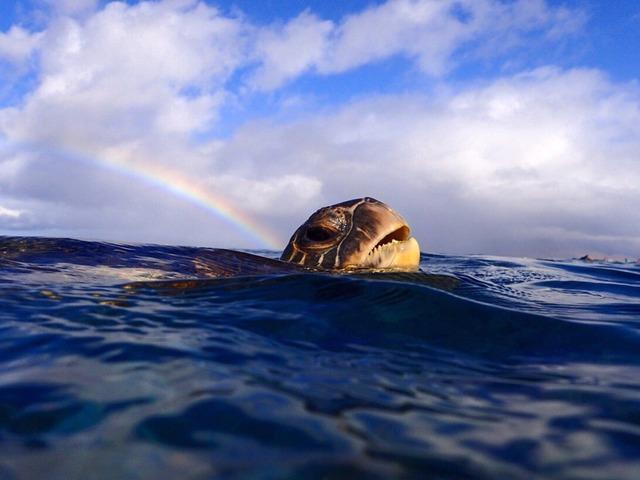 Ocean Turtle by Ana Sullivan