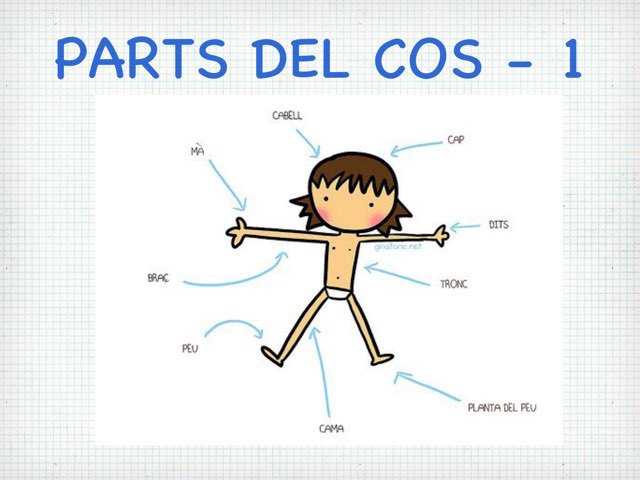 Parts del Cos by MARTA CAMPUZANO