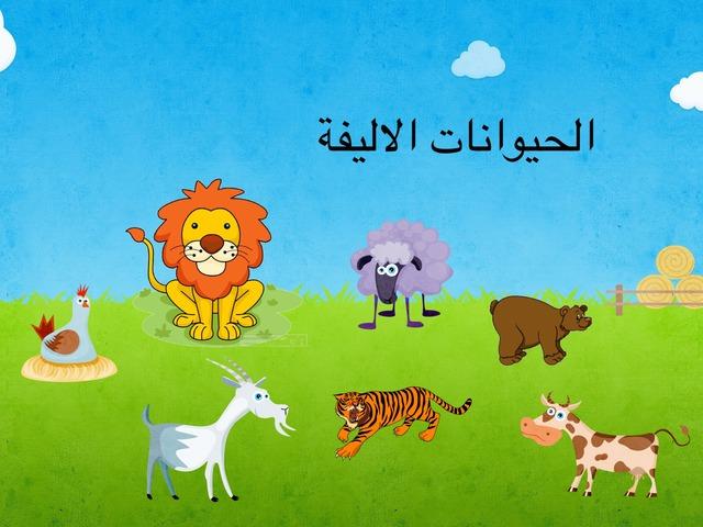 الحيوانات الاليفة by Anayed Alsaeed